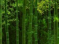 竹与生活,竹制生活用品