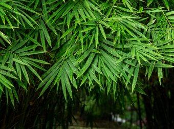 竹子在我国的悠久历史及发展